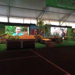 Kiwi stand